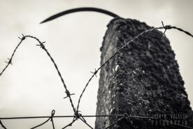 Dachau-campo-040